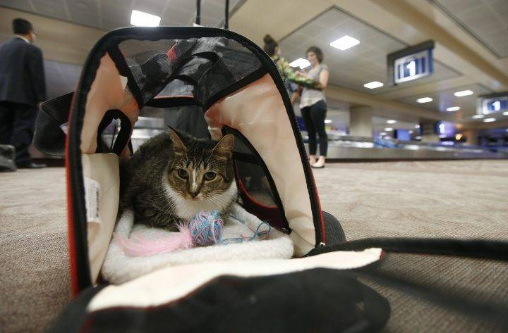 Photo of U.S. proposal seeks to limit types of emotional support animals allowed on flights