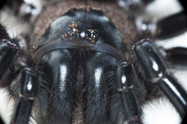 Photo of Fires, floods, now funnel-web spiders: Australia facing arachnid boom