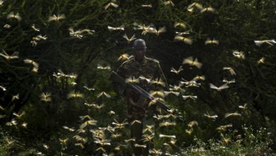 Photo of Crews use spray planes to combat massive locust swarms in East Africa