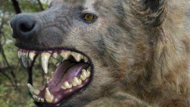 Photo of Panic as giant hyena escapes from Imo zoo
