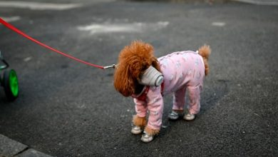 Photo of Reports of dog with coronavirus 'incredibly irresponsible,' says professor