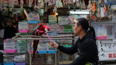 Photo of Why China's wildlife trade ban will help, but not stop, coronavirus