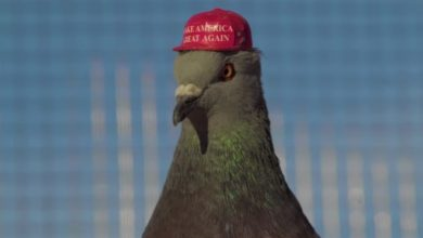 Photo of Pigeons in tiny MAGA hats take flight for pro-Trump stunt in Las Vegas