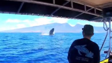 Photo of Lucky birthday boy catches sight of triple whale breach in Hawaii