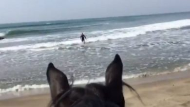 Photo of Not rad: Italian police catch man surfing during coronavirus lockdown