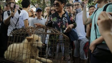 Photo of Shenzhen bans eating dogs, cats in post-coronavirus first for China
