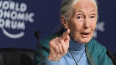 Photo of Jane Goodall says 'disrespect' for animals, nature caused coronavirus pandemic