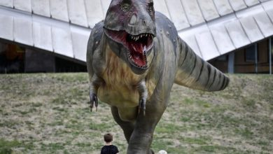 Photo of Researchers say new evidence suggests T-Rex was built for distance, not speed